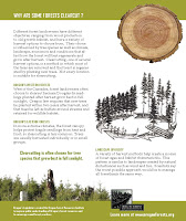Why are some forests clearcut?